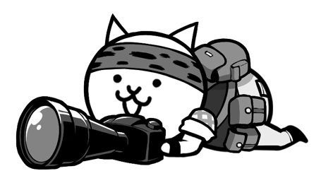 ネコ カメラマン